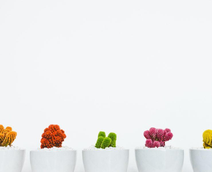 Kaktusi Minimalizam